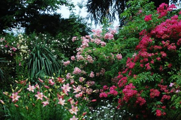 © Les Roses anciennes de la Bonne Maison