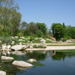 The African savanna in the zoo of Tête d'Or Park © Parc de la Tête d'Or