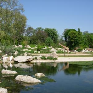 The African savanna in the zoo of Tête d'Or Park © Parc de la Tête d'Or