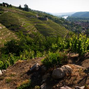 Hills of the Rhône Valley near Vienne