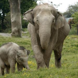 Elephants © Le PAL